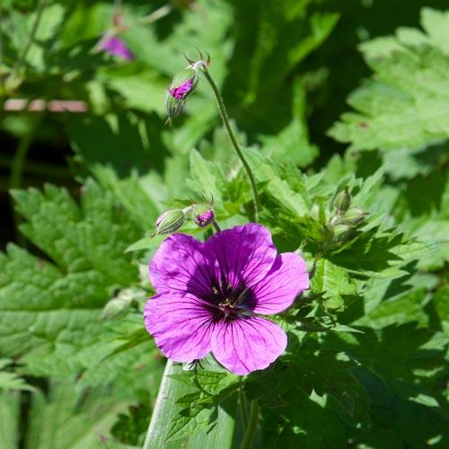 Die Vollkommenheit einer einzelnen Blüte 06