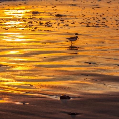 Der Moment, in dem der Sonnenuntergang ein einzigartiges Kunstwerk auf den Sandstrand malt... 04