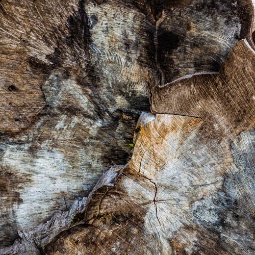 Die Holzmaserung eines alten Baumes erzählt eine lange Geschichte 02