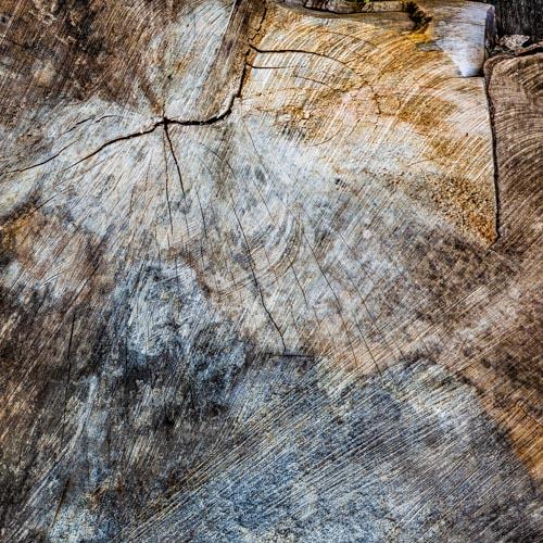 Die Holzmaserung eines alten Baumes erzählt eine lange Geschichte 04
