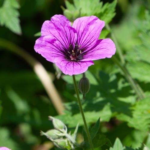 Die Vollkommenheit einer einzelnen Blüte 05