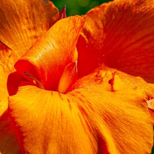 Die Vollkommenheit einer einzelnen Blüte 02