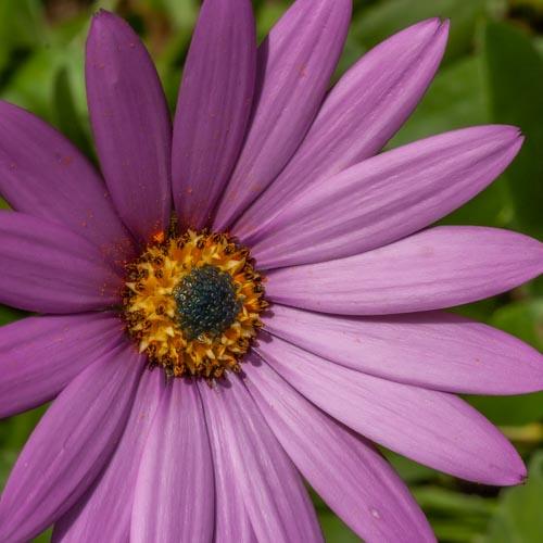 Die Vollkommenheit einer einzelnen Blüte 10